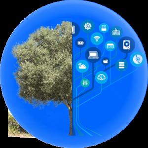 ritec-riego inteligente-olivar-proyecto i+d+i