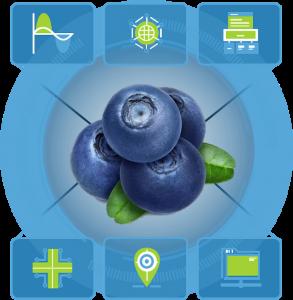 ritec-berries 4.0.-proyecto i+d+i