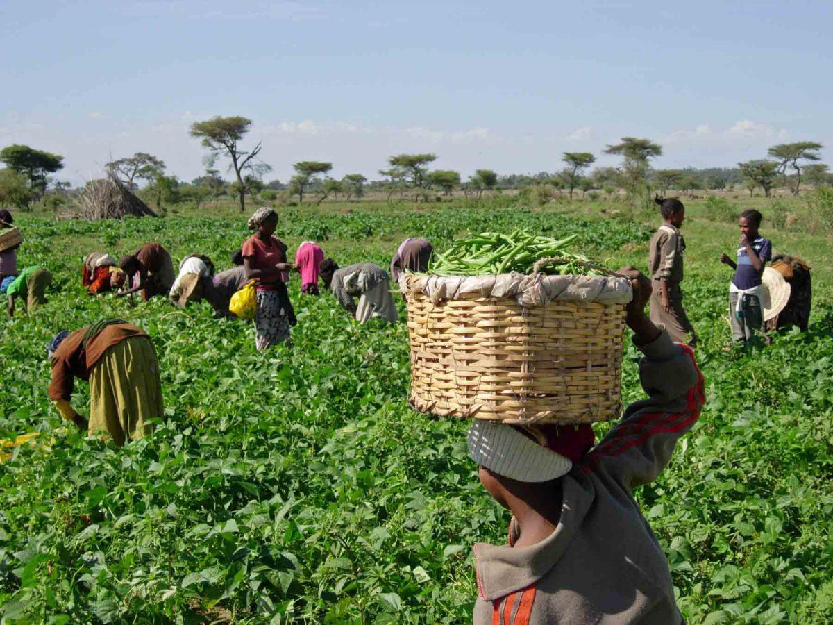 MISIÓN COMERCIAL EN KENIA Y TANZANIA