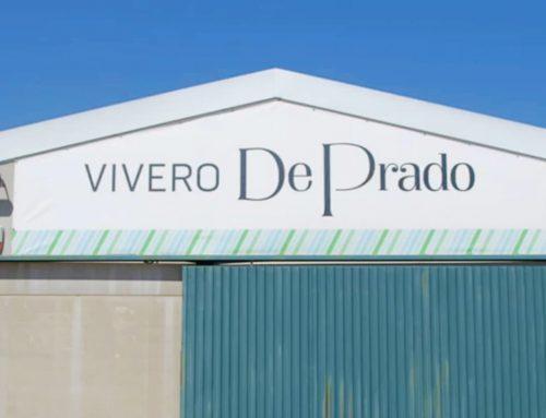 Vivero del Grupo de Prado [Proyecto]