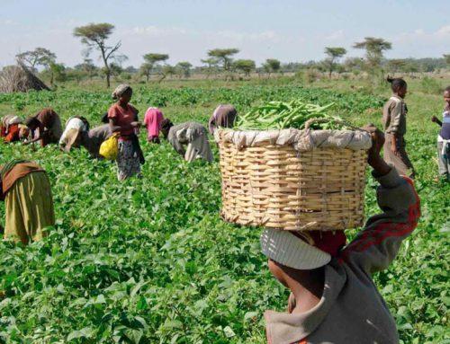 Misión Comercial Virtual a Senegal y Costa de Marfil